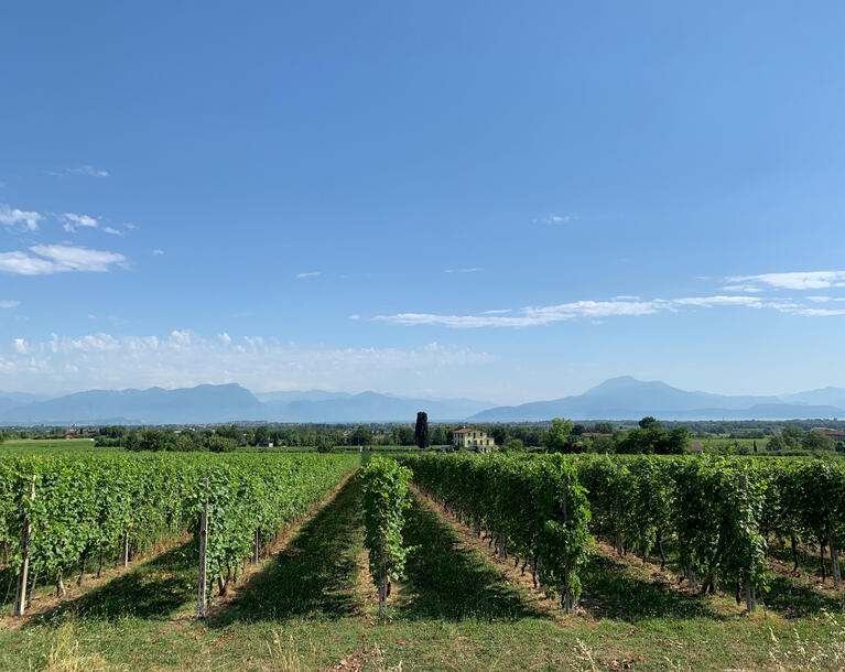 Wine experience  in Lugana