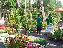 Edizione 2017 a Rimini di Marina Centro in fiore