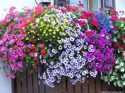 Festa dei balconi fioriti a santarcangelo promozione - Fiori da giardino primavera estate ...
