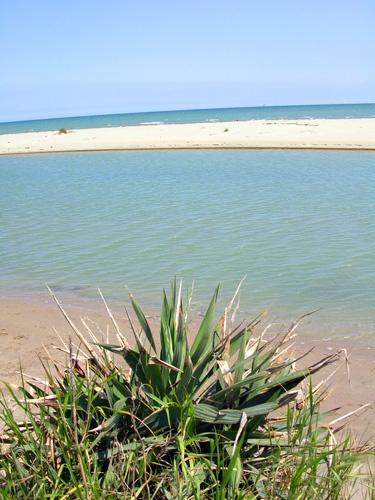 Spiaggia del Lido di Classe