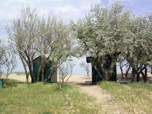 Spiaggia di Marina di Ravenna