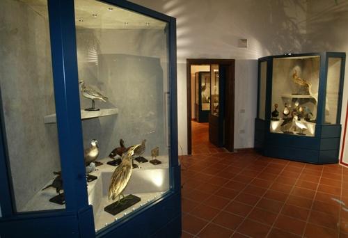 Museo di Scienze Naturali Alfredo Brandolini