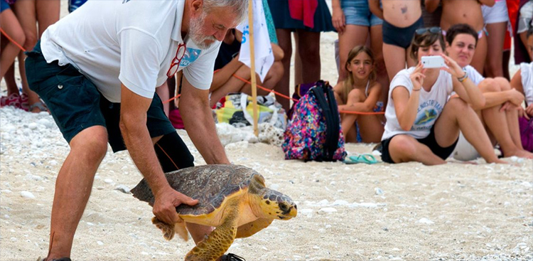 fondazione cetacea riccione turtles hospital on the beach adriatic-sea