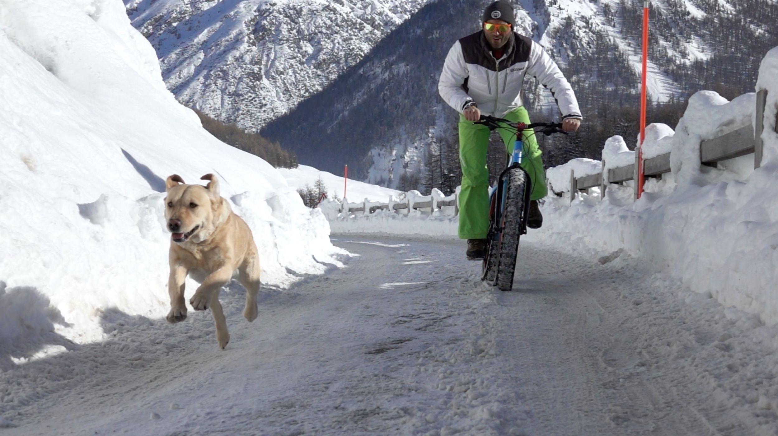 Livigno Hotel per cani