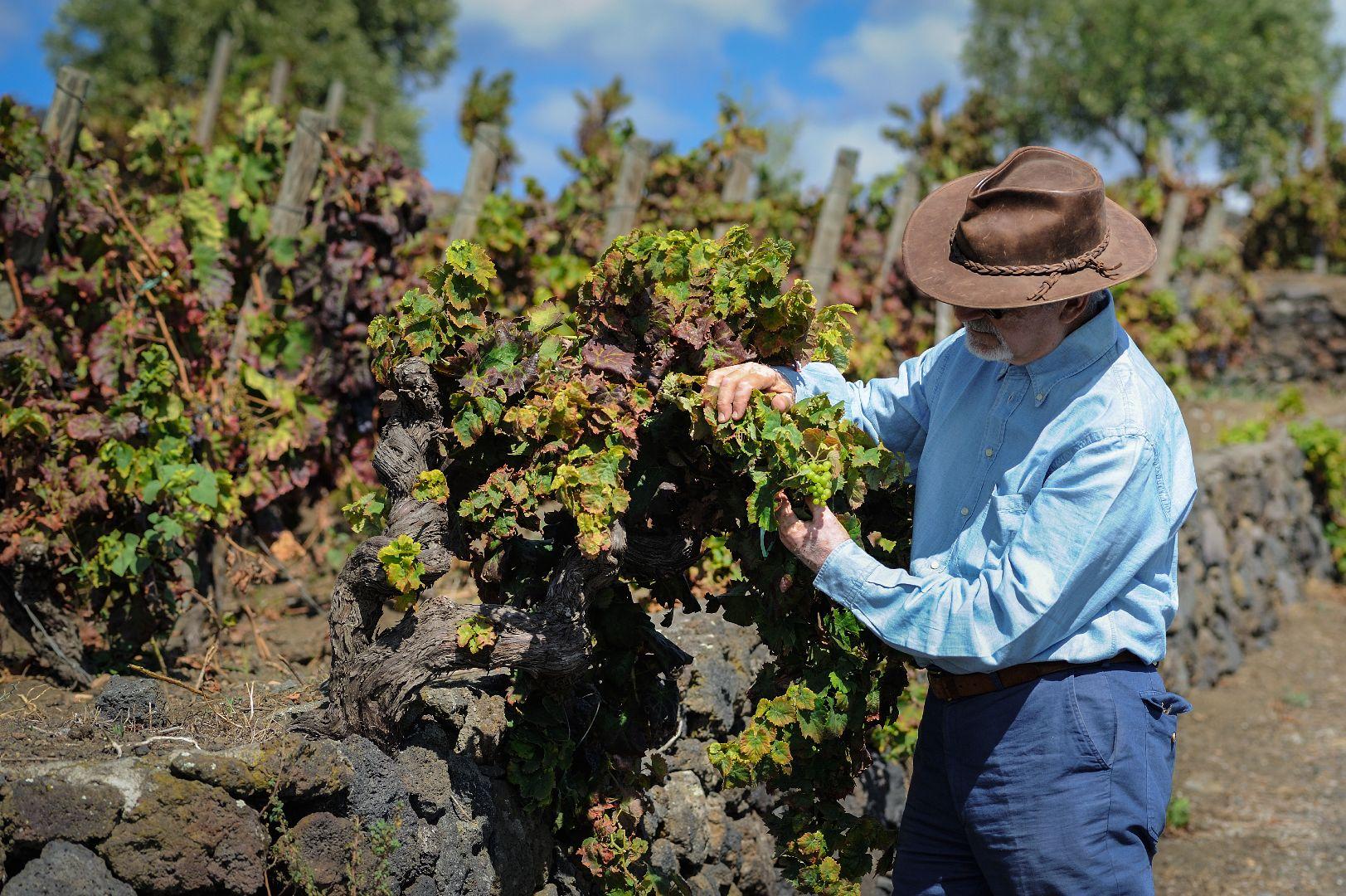 Wine tour in Mount Etna Barone di Villagrande & Benanti Wineries ...