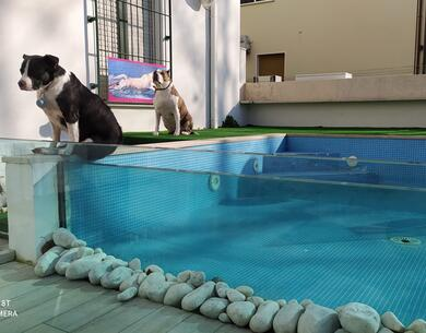 hotelkristalex en stay-with-dog-trainer-service-in-a-pet-friendly-hotel-in-cesenatico 028