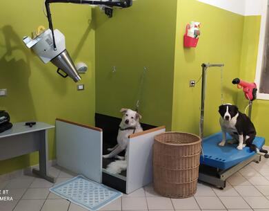 hotelkristalex en stay-with-dog-trainer-service-in-a-pet-friendly-hotel-in-cesenatico 029