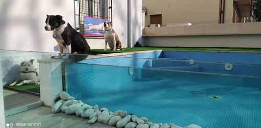 hotelkristalex de natur-urlaub-pet-lovers 024