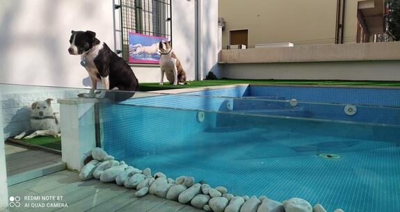 hotelkristalex en stay-with-dog-trainer-service-in-a-pet-friendly-hotel-in-cesenatico 023