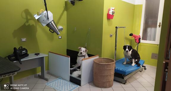 hotelkristalex en stay-with-dog-trainer-service-in-a-pet-friendly-hotel-in-cesenatico 024