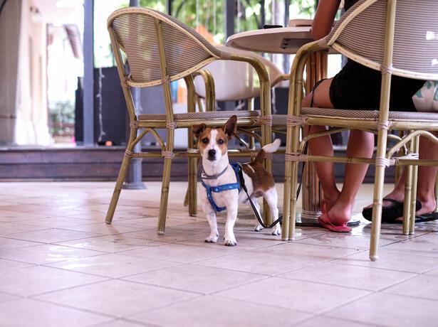 hotelfraipini it vacanze-con-animali-a-rimini-offerta-dog-friendly-con-spiaggia 018