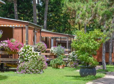 Late-June holidays in mobile home
