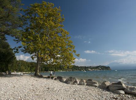 Offerta piazzola per 2 persone in campeggio sul Lago di Garda
