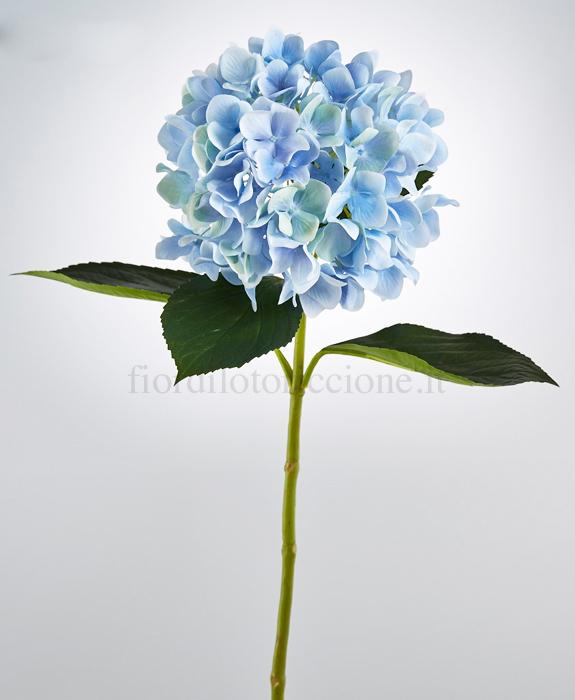 Ortensia del duca scegli il colore fiori e piante for Colore ortensia