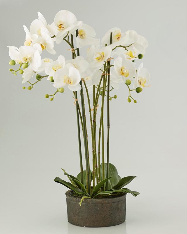 Pianta di orchidea phaleonopsis scegli il colore fiori for Orchidea finta