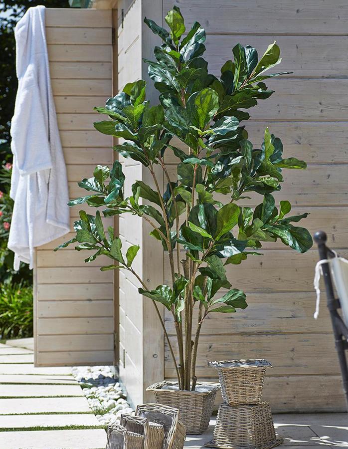Pianta Grande Verde Ficus | Fior di Loto Riccione