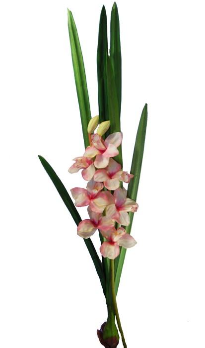 Orchidea Cymbidium Con Pianta