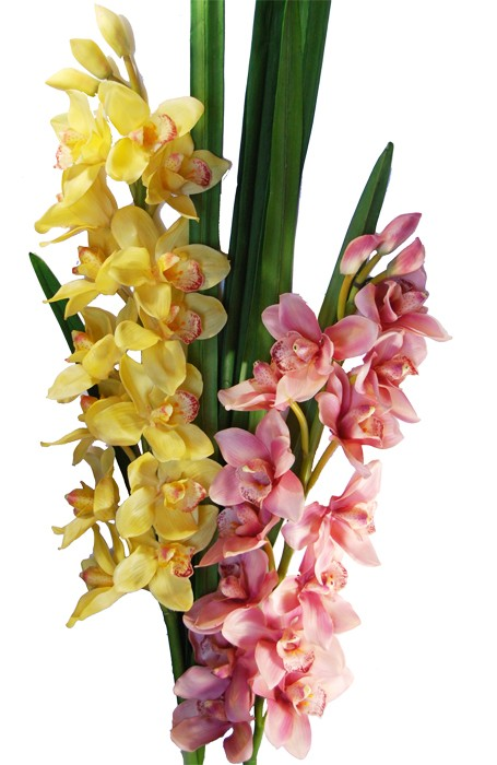 Orchidea tropicale cymbidium gigante fior di loto riccione - Orchidea da esterno cymbidium ...